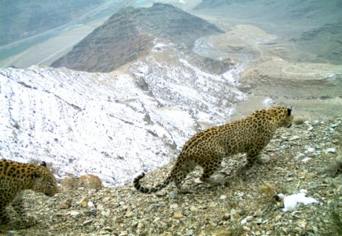 leos nakhchivan