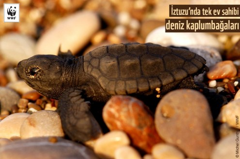 İztuzu'nda Tek Ev Sahibi Deniz Kaplumbağaları | Sırtçantam Gezi ve Kültür Dergisi
